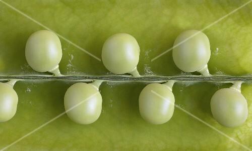 Peas in a Pod; Close Up