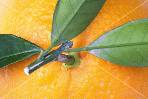 An orange with a stalk and leaves (detail)