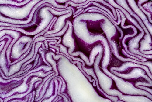 A sliced red cabbage (detail)