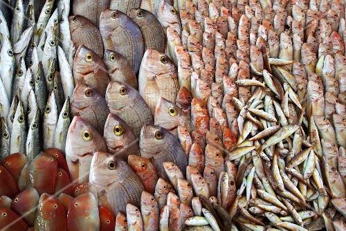 Lots of different Mediterranean fish
