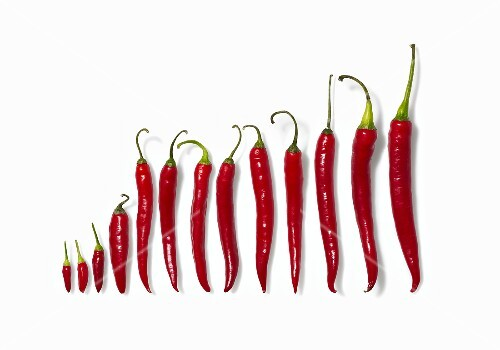 Fresh red chilli peppers (diagram)