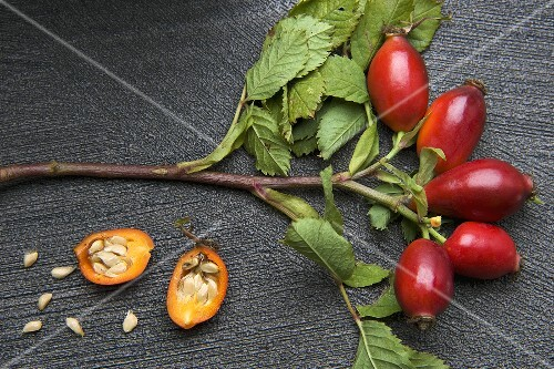 A sprig of rosehips and a halved rosehip