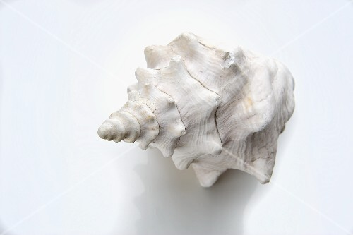 A white shell