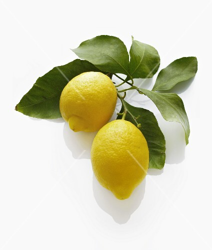Two lemons with leaves