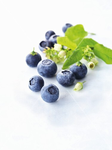 Blueberries with blossoms and leaves