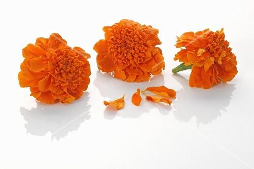 Three marigolds
