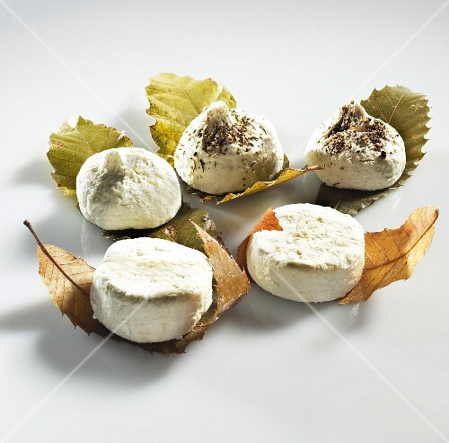 Organic goat's cheese on chestnut leaves