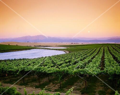 Wine-growing region in Swartland near Riebeek West, S. Africa