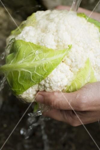 Washing a cauliflower