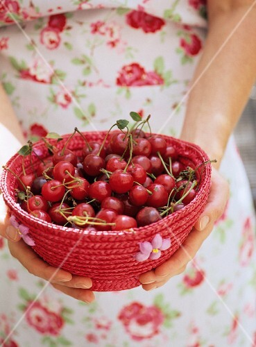 Hands holding a red basket of cherries