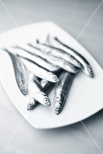 Several anchovies