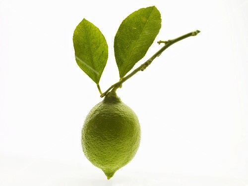 Unripe lemon on twig with leaves