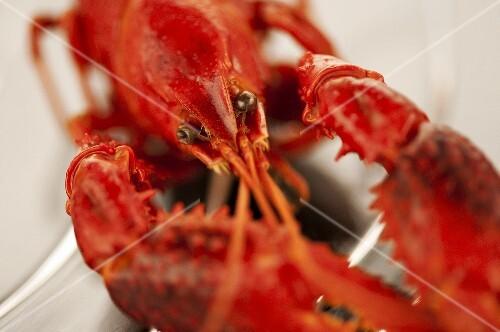 Cooked freshwater crayfish (close-up)