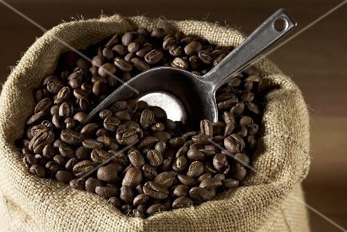 Coffee beans in a jute sack