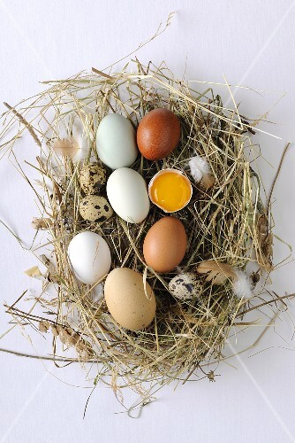 Various types of eggs on hay