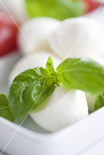 Mozzarella and basil