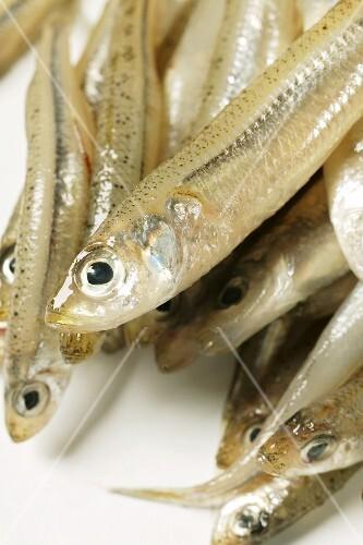 Frische Ährenfische