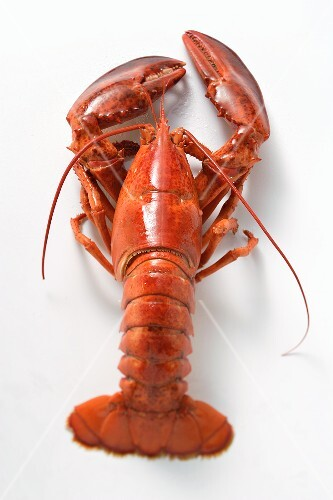 A single boiled lobster