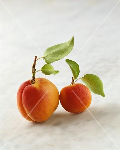 Two Wachau apricots