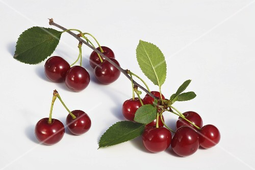Sour cherries with twigs and leaves