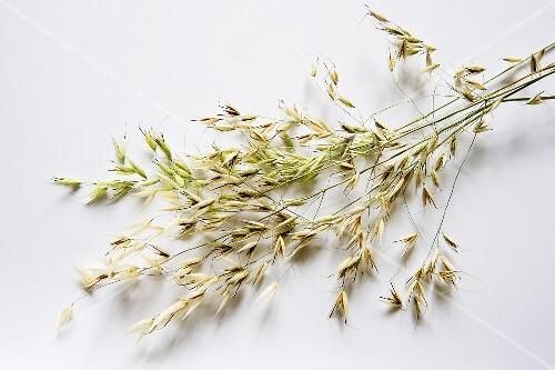 Ears of oats