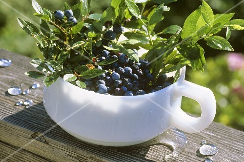 Fresh Picked Wild Maine Blueberries in a Handled Bowl