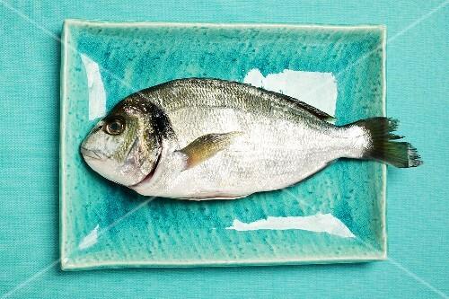 Fresh sea bream on blue plate