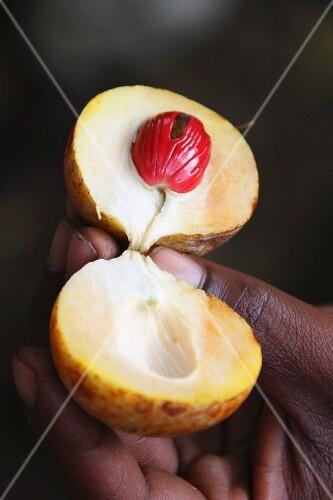 An opened nutmeg fruit (Zanzibar, East Africa)