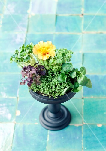 Various types of cress in a planter