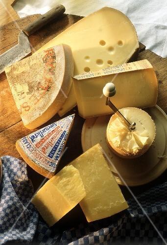 Kinds of Swiss Hard Cheese