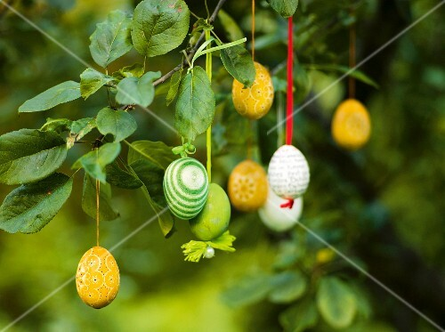 Easter eggs hanging from a branch