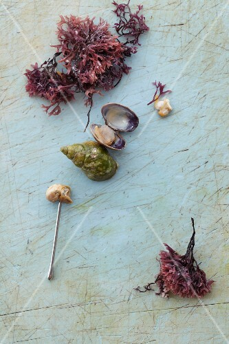 Muscles, snails, oysterleaf and muscle flesh on a skewer