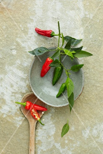 Red and green chillis on a branch (seen from above)
