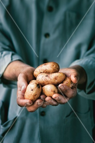 A man holding potatoes in his hands