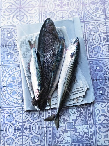 Salmon, mackerel and herring on a newspaper