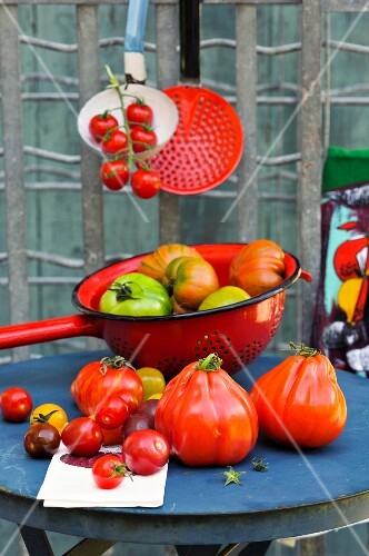 An arrangement of various different tomatoes