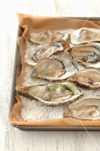 Oysters in salt on a baking dish