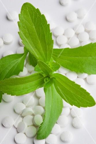 Stevia plant leaves and stevia tablets