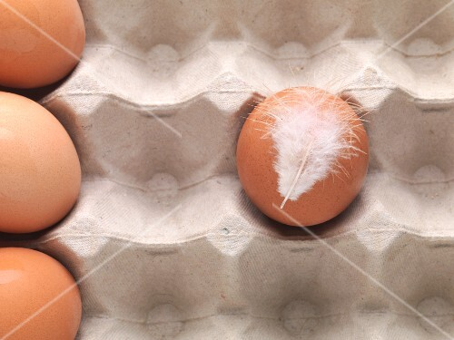 A chicken egg with a feather in an egg box (seen from above)