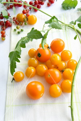 Yellow cocktail tomatoes and tomato leaves