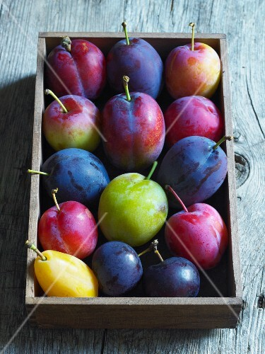 Various plums in a wooden box