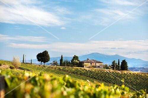 An estate in Chianti Classico