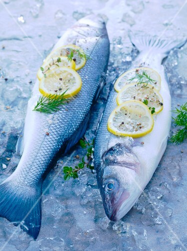 Two Whole Fish on Ice with Lemon Slices and Fresh Herbs