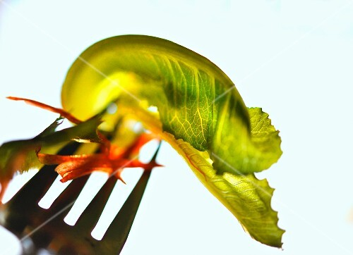 A lettuce leaf and carrot strips on a fork