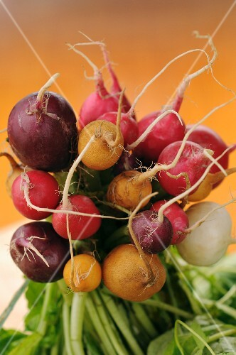 A bunch of various radishes
