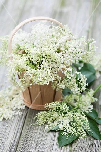 Elderflowers in woodchip baskets