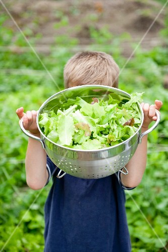 Boy with bowl of lettuce from garden