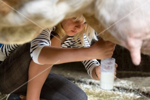girl milking cow by hand