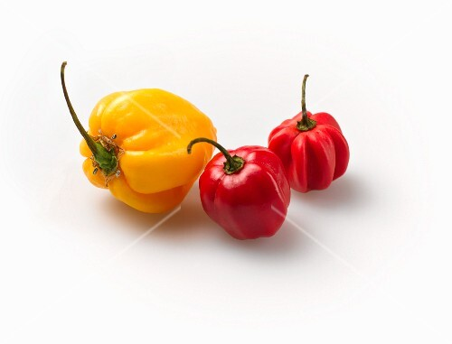 Red and yellow habaneros