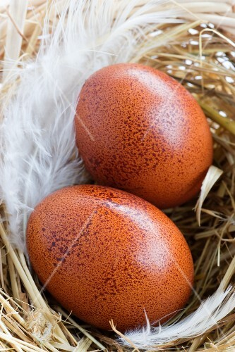 Two brown eggs in a nest
